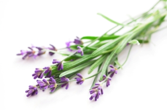 Complementary Therapy Price list. small lavander